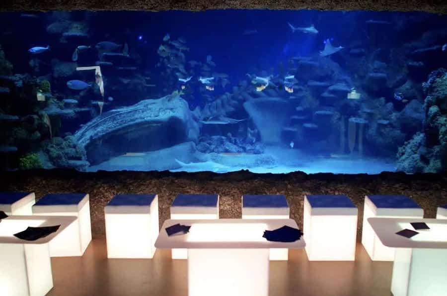 london aquarium christmas party london